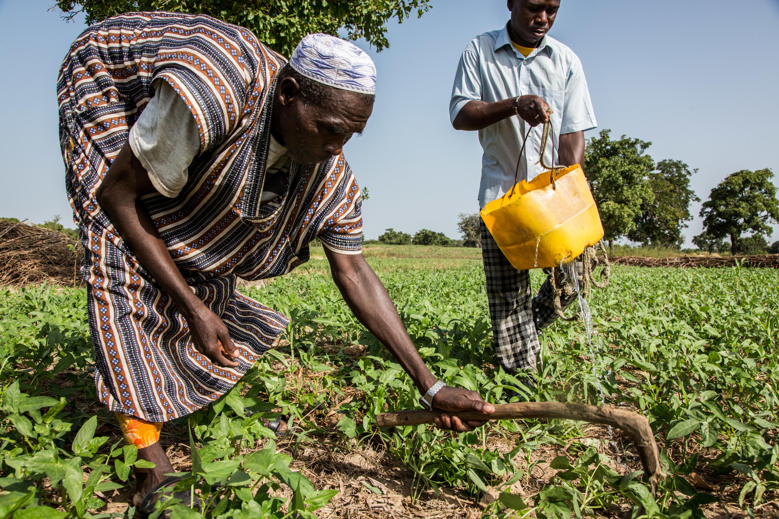 Bamogo Salam, 60, (left) hoes the earth while Bamogo Salifou, 30, waters crops in a market garden using water from a WaterAid well, in Basbedo, Burkina Faso, October 2014.