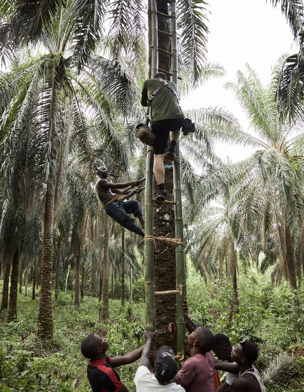 Joey Lawrence photographing Momoh Babaga, 22, as he climbs trees to collect palm kernels, Tombohuaun, Sierra Leone, May 2017.