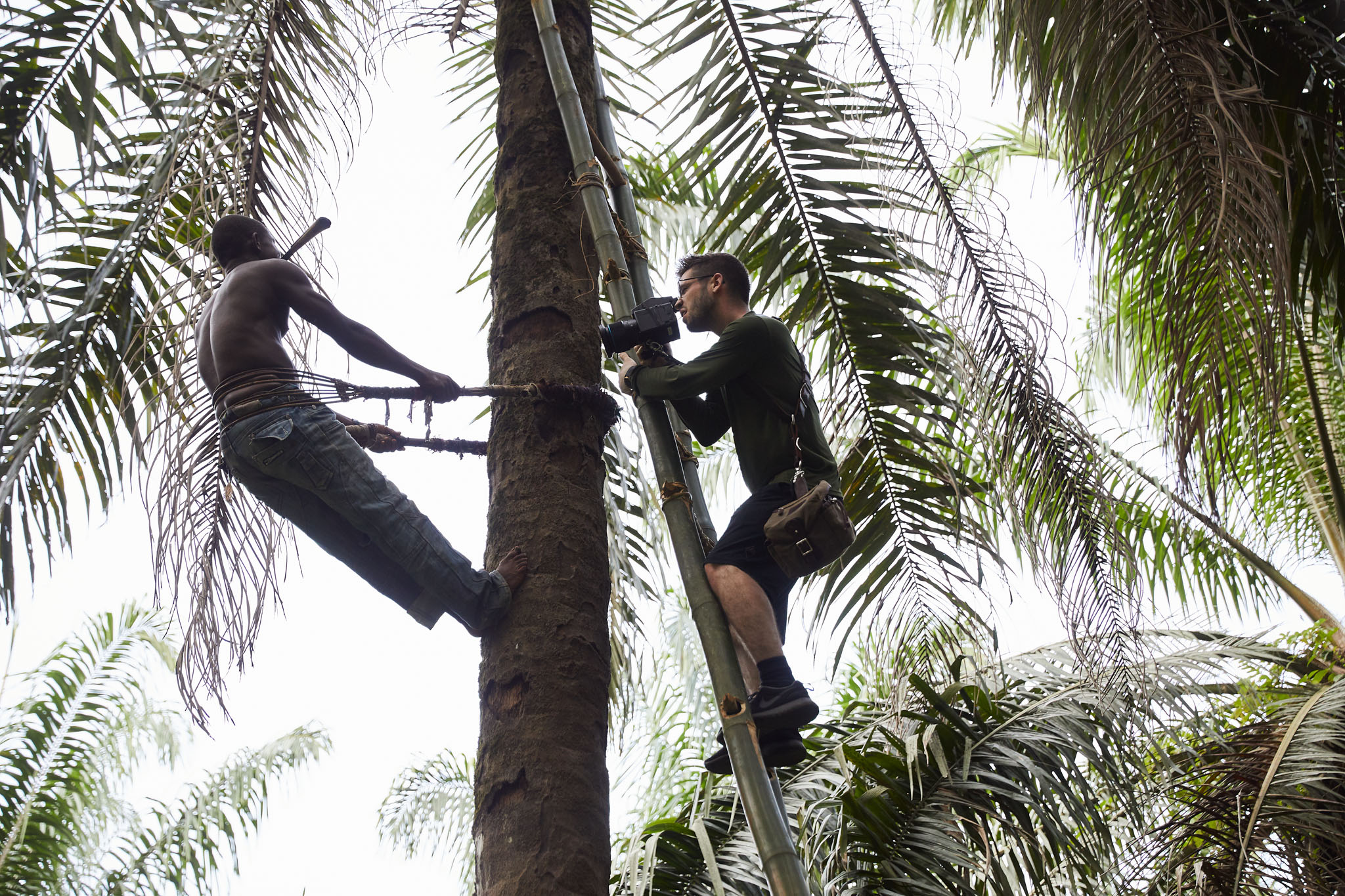 Joey Lawrence photographs Momoh Babaga, 22, as he climbs trees to collect palm kernels, Tombohuaun, Sierra Leone, May 2017.