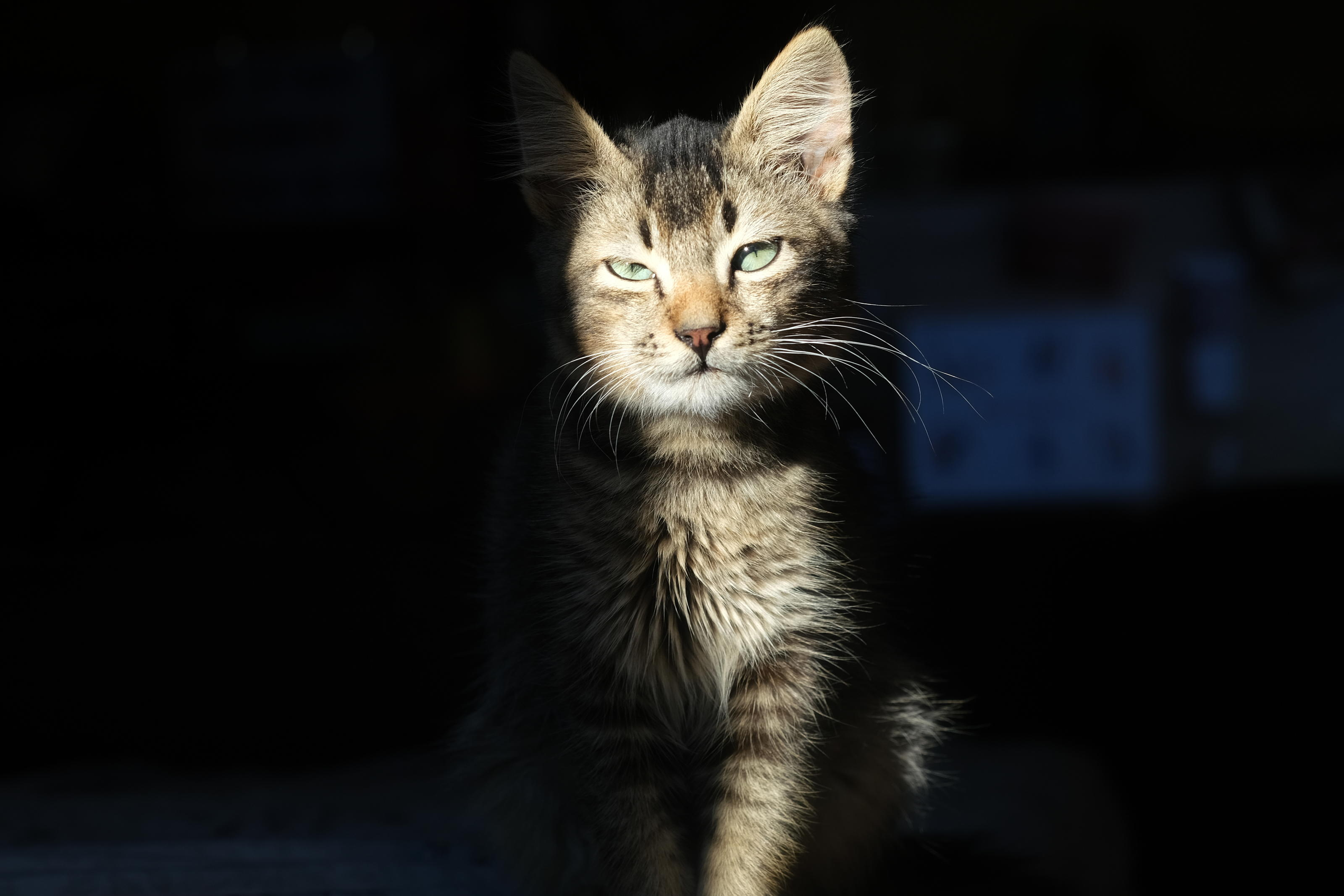 Honey the kitten standing in the sunlight
