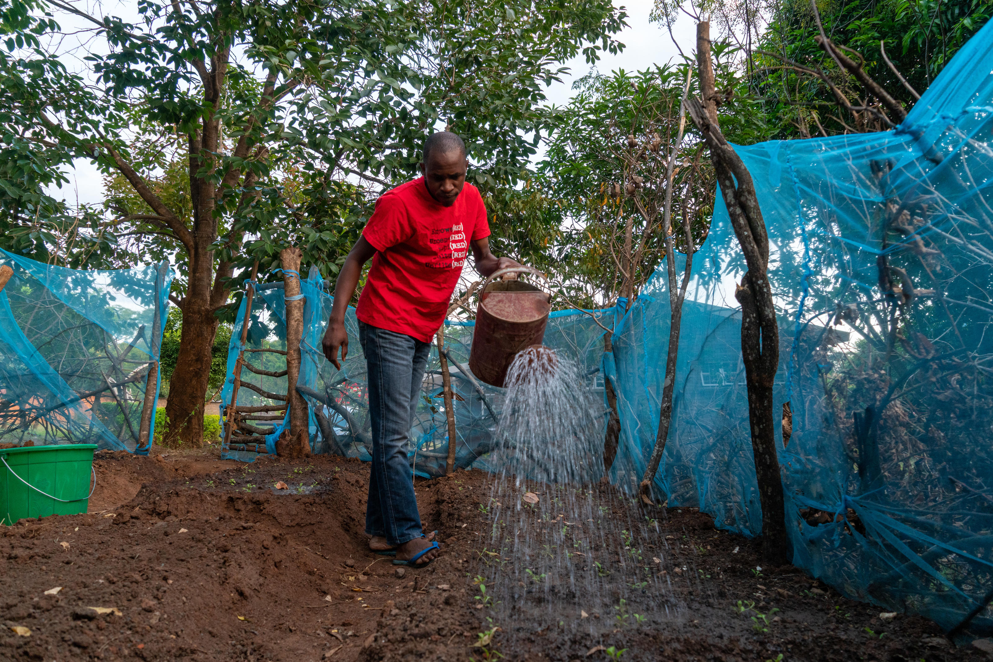 Dennis watering the vegetables inside his vegetable garden at home. Covid-19 response. Lockdown diaries – Dennis Lupenga. May 2020